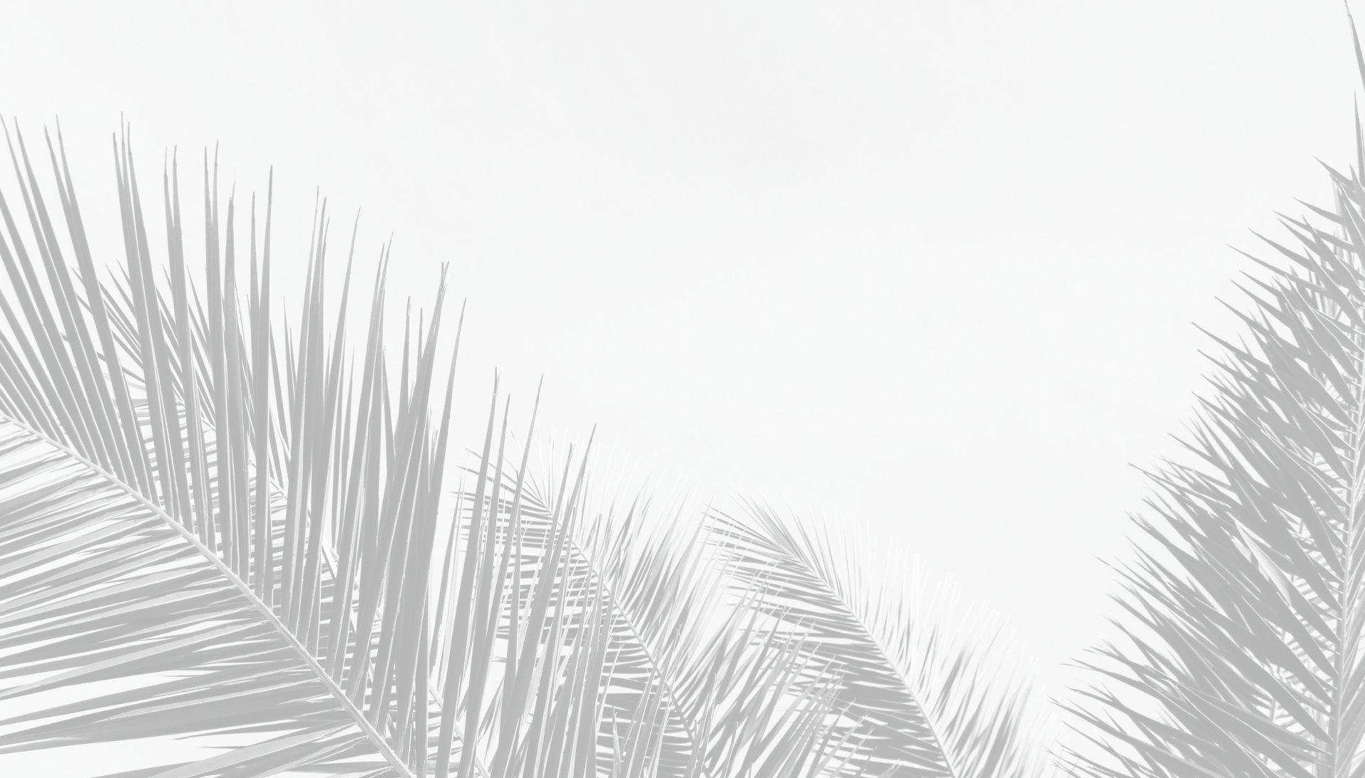 palms-grey